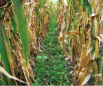 /ext/galleries/cover-crops-from-the-corn-belt-and-beyond1/full/Untitled4.png