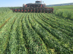 /ext/galleries/rolling-down-cover-crops/full/rolling-covers-6.jpg