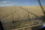 /ext/galleries/scenes-from-the-palouse/full/065_Palouse_FL_0810.jpg