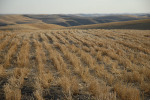 /ext/galleries/scenes-from-the-palouse/full/083_Palouse_FL_0810.jpg