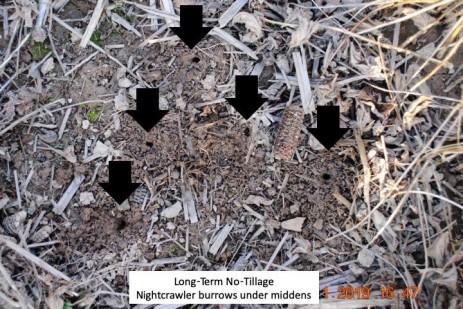 Earthworm Middens