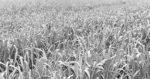 auer-crop.jpg