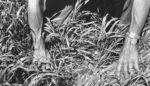 wheat-pic-1.jpg