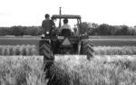 soybeans-wheat.jpg