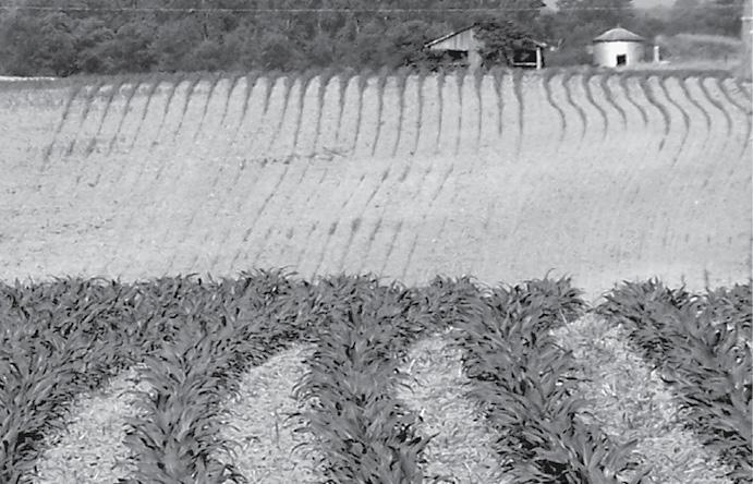 Soil With Gypsum Additives : Gypsum — a multitasking soil amendment no