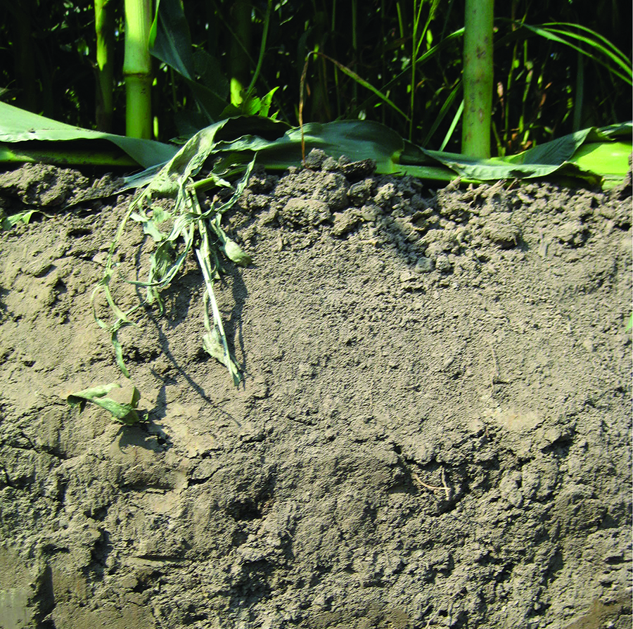 Soil amendments may be missing piece of the production for Soil amendments