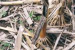 BiocatTreated-root-crown-decaying.jpg