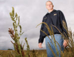johnson-waterhemp.jpg