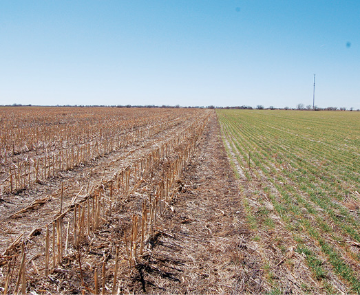 Image gallery milo crop - Profitable crops small plots ...