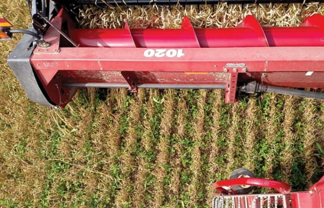 Creating a Blanket of Benefits with Cover Crop Creativity