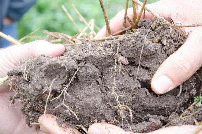 Can I Increase Soil Organic Matter by 1% This Year?