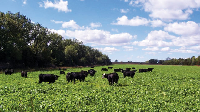 Make Covers a Forage Option  for Better No-Till Profitability