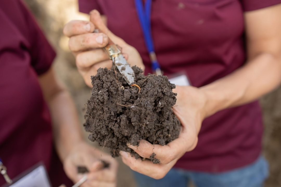 soil test sampling