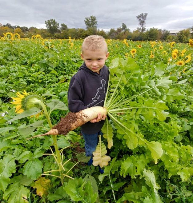 No-Till, Cover Crops Pay Dividends on Dairy Farm