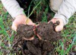 Linenbringer-soil
