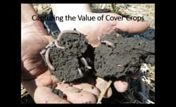 Capturing-full-value-of-cover-crops-Video