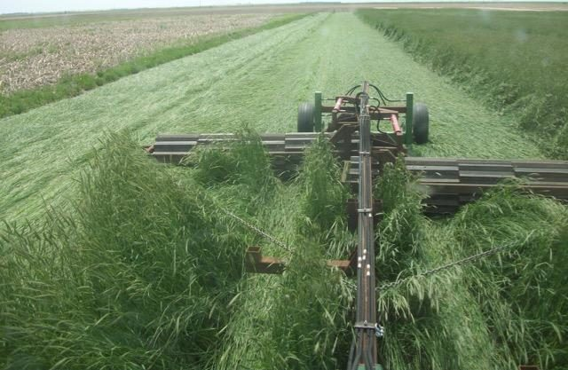 Roller-crimper terminating cover crop