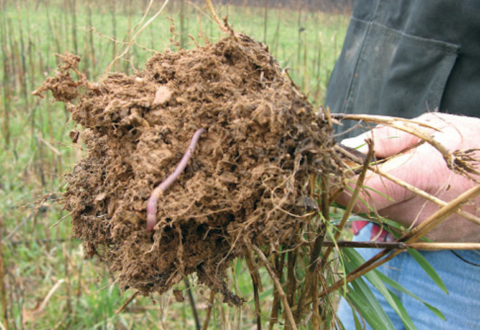 healthy no-till soil with worm