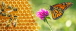 bees on honeycomb and monarch on clover