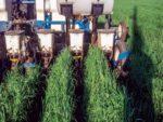 planting-into-rye