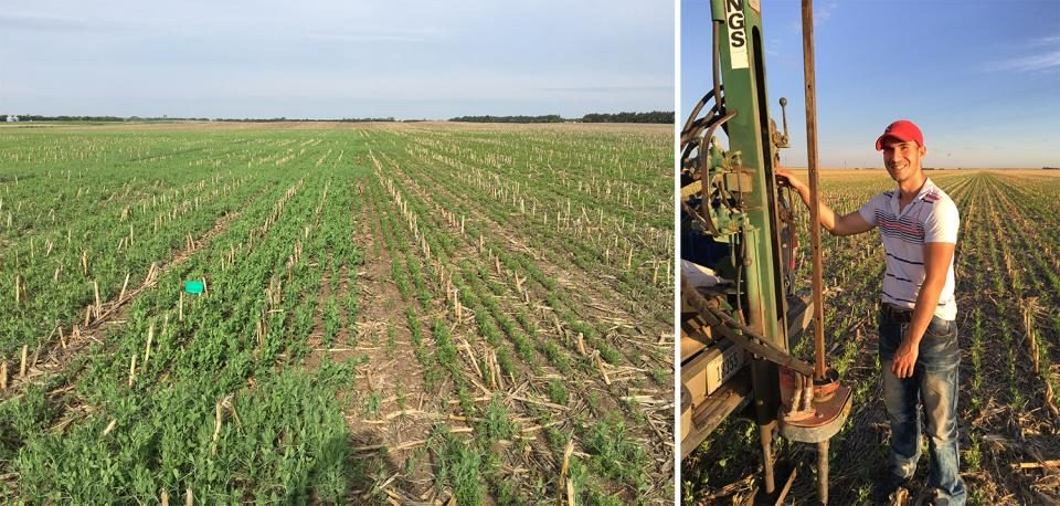 Strips of field peas and chick peas side-by-side win April.