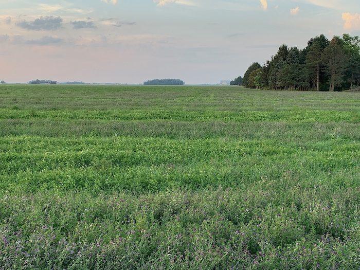 GO SEED berseem clover and alfalfa