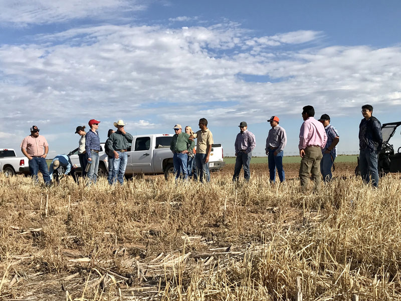 New Mexico State cover crop research