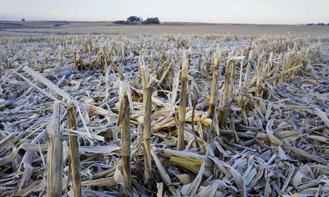Crop Residue Affects Soil Life Between Growing Seasons
