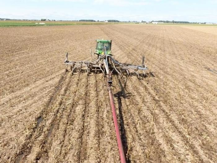 manure application on newly planted wheat