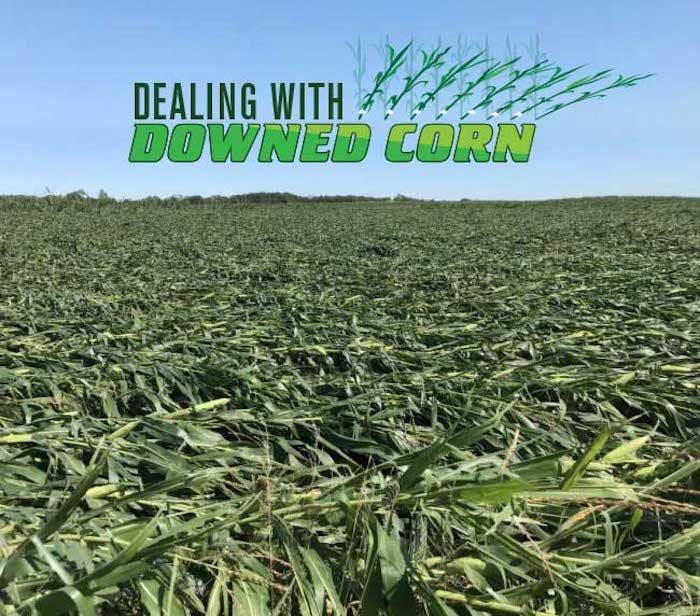 downed corn image with logo
