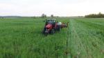 Brandt cover crops