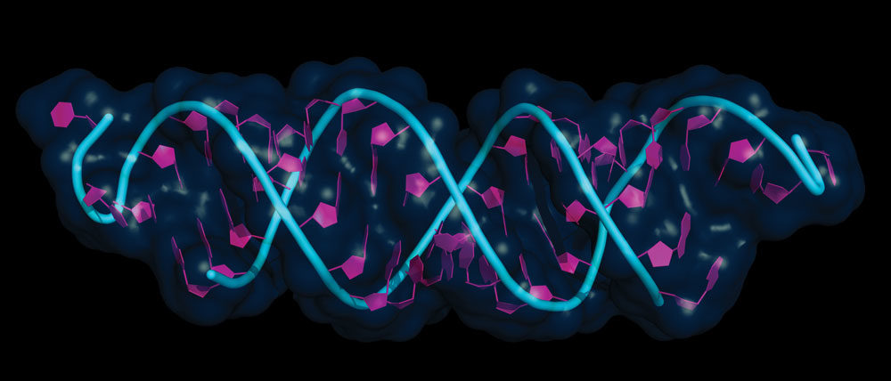 RNA-interference.jpg