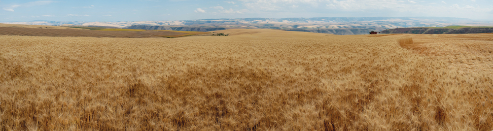 No-Tilling-in-the-Palouse-region.jpg
