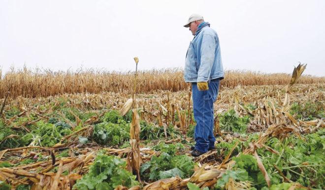 Hitting Pay Dirt by Boosting Soil Biology