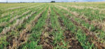 Winter-barley-pic.jpg