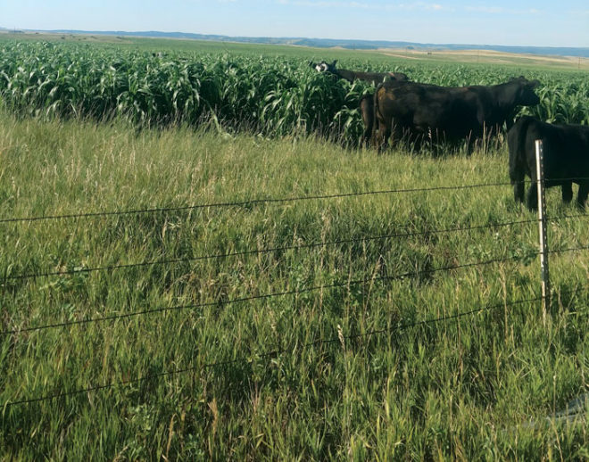 What I've Learned from No-Tilling: No-Till and Cover Crops Deliver More From Field and Pasture