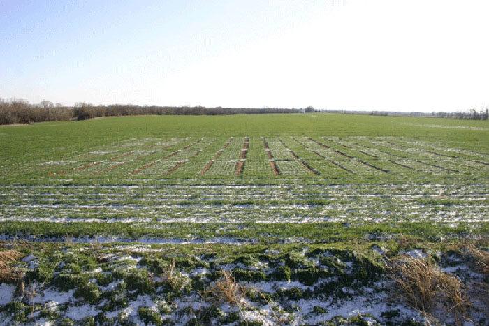 KSU-wheat-FIgure-1.jpg