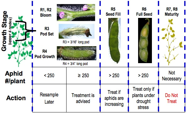 Soybean Aphid Threshold