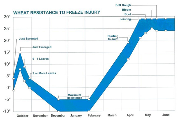 Wheat Resistance To Freeze Injury Graph