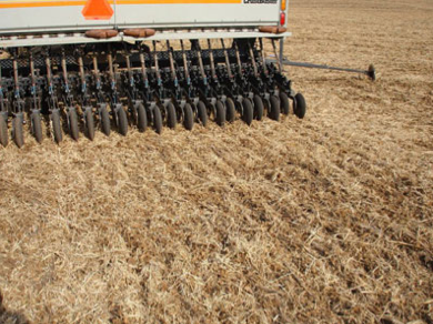 Tips for seeding wheat
