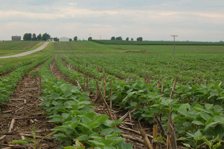 No-Till Soybean Specialists Find Profitable Niche