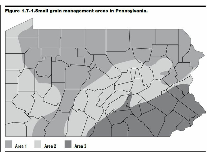 Pa small grains