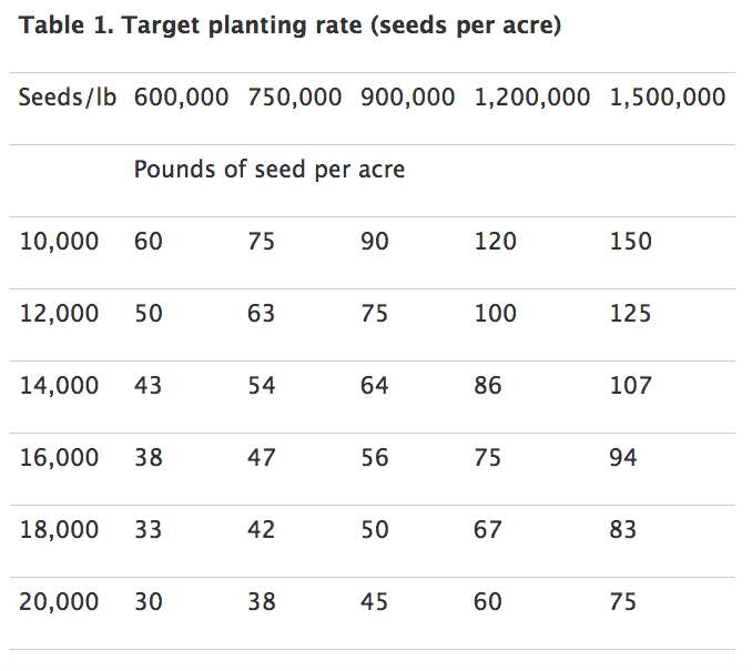 wheat seed size