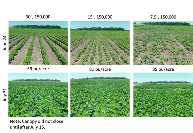 soybean row widths