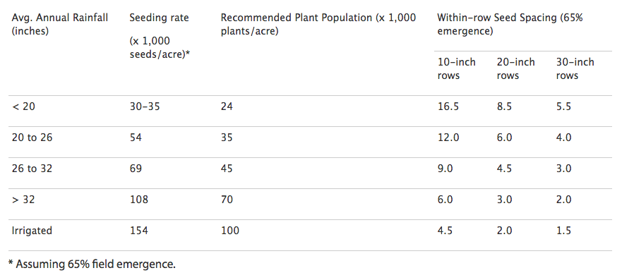 Sorghum Seeding Rates
