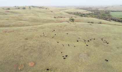 Uses for drones on ranches