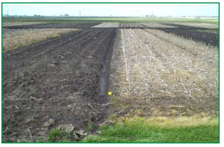 Figure 2. This photo shows a pre-planting comparison of the continuous corn, plow (left) and continuous corn, no-till systems in the Purdue University long-term rotation and tillage experiment.