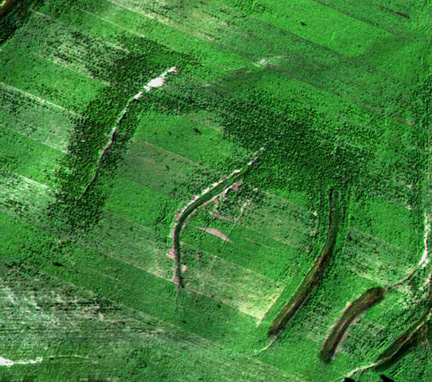 Darker areas around waterways in the upper right of the image  on the left and the blow-up of  that area (above), indicate more  vegetation from earlier  germinating radishes.