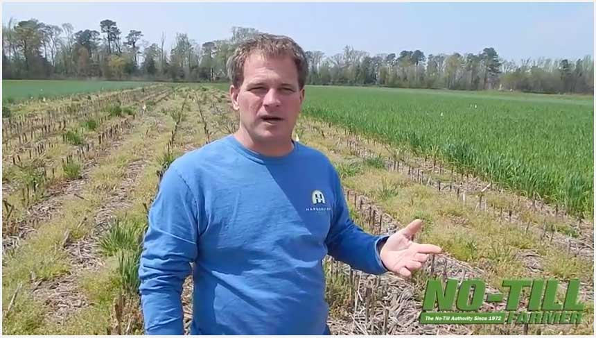 Testing Cover Crops' Ability to Hold and Release Nutrients