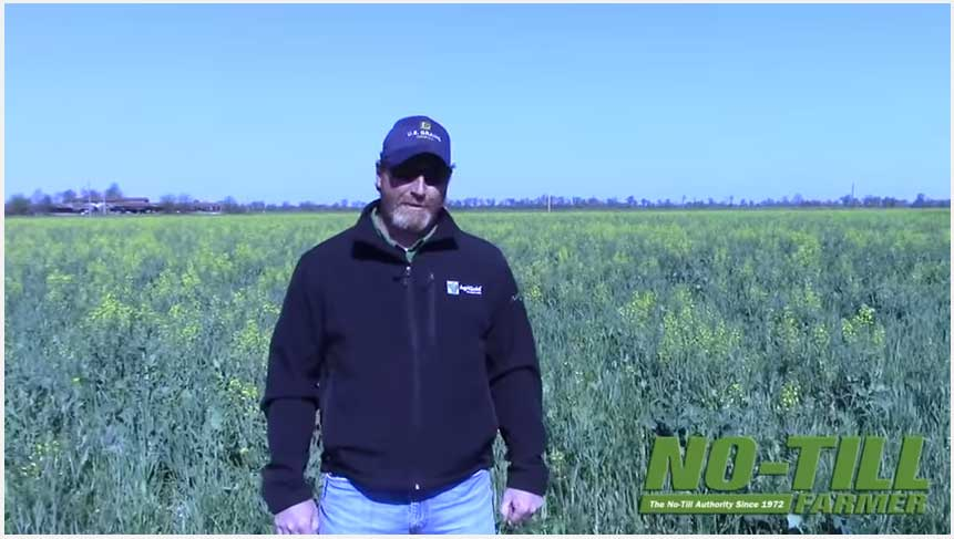 Adding Cover Crops Before Soybeans
